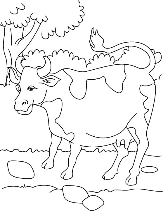 Cow Coloring Sheets for Kids Print