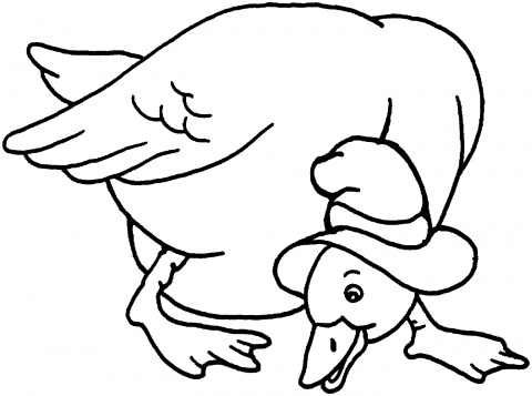 Print Duck Coloring Pages for Free