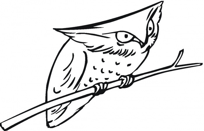 Download Owl Coloring Pages Printable