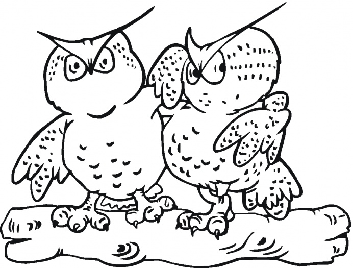 Owl Coloring Pages Kids Print