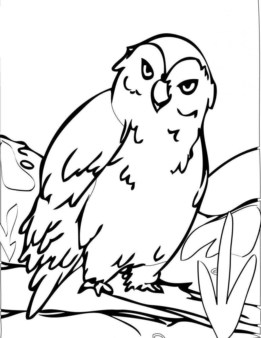 Owl Coloring Pages to Print Free