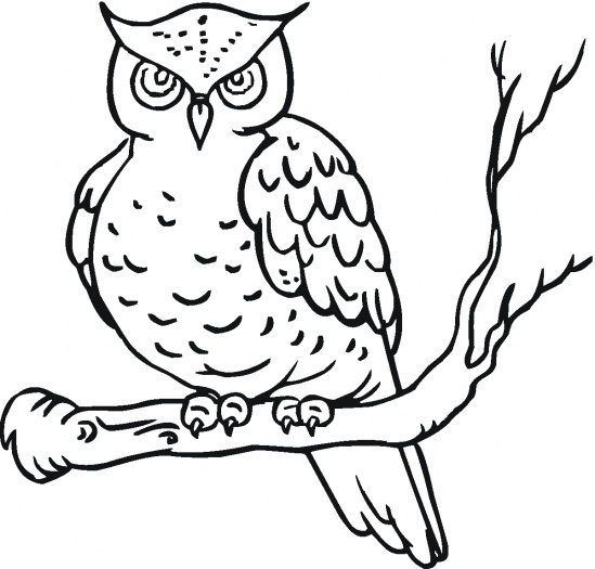 Owl Coloring Sheets Kids