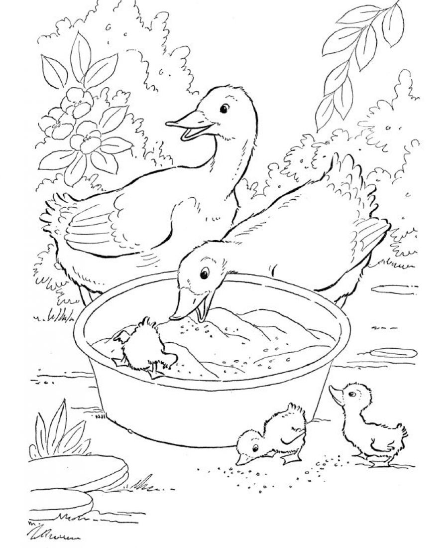 Duck Coloring Pages for Print