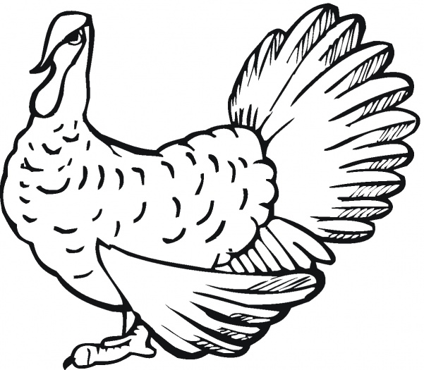 Turkey Coloring Pages for Free Print
