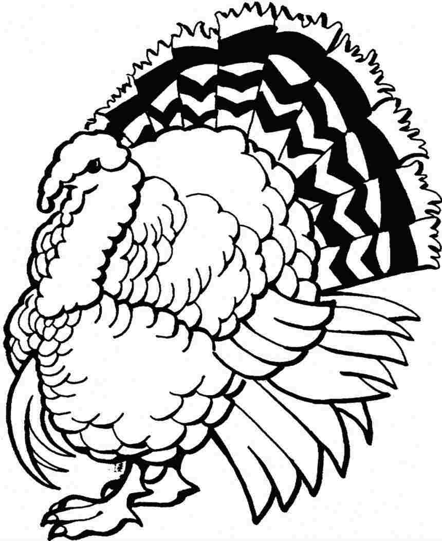 Wild Turkey Coloring Pages to Print