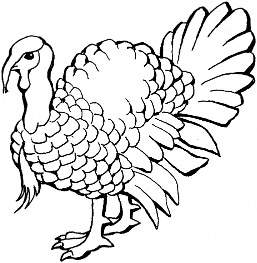 Wild Turkey Coloring Pages