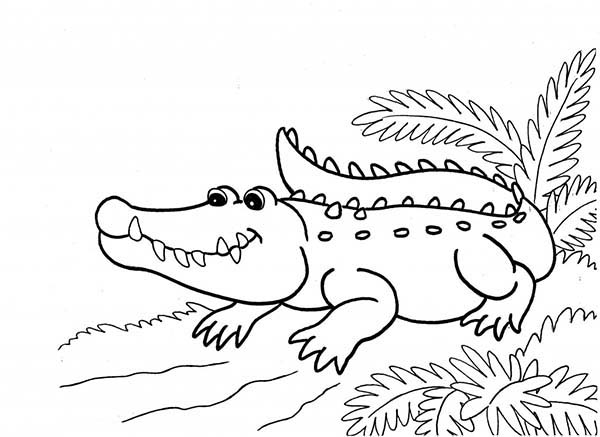 Alligator Coloring Pages | 360ColoringPages