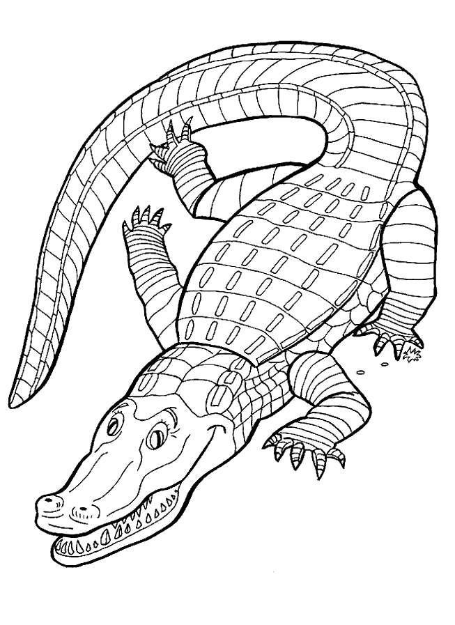 Alligator Coloring Pictures