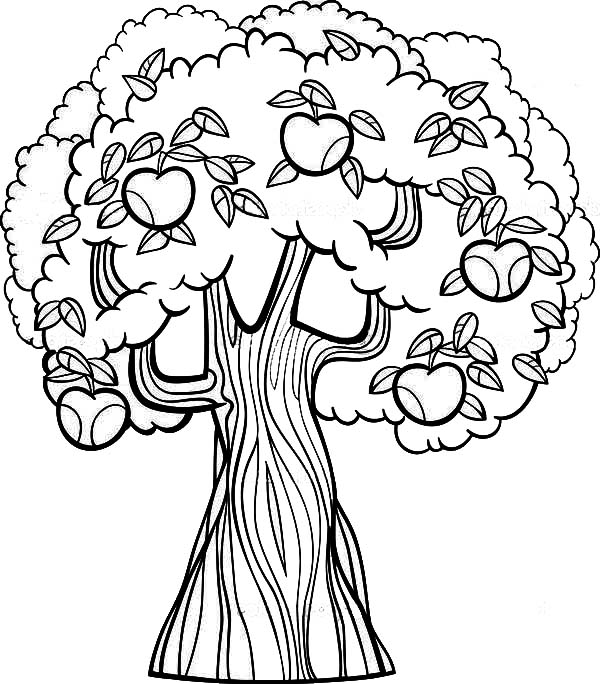 apple tree coloring pages - photo#10