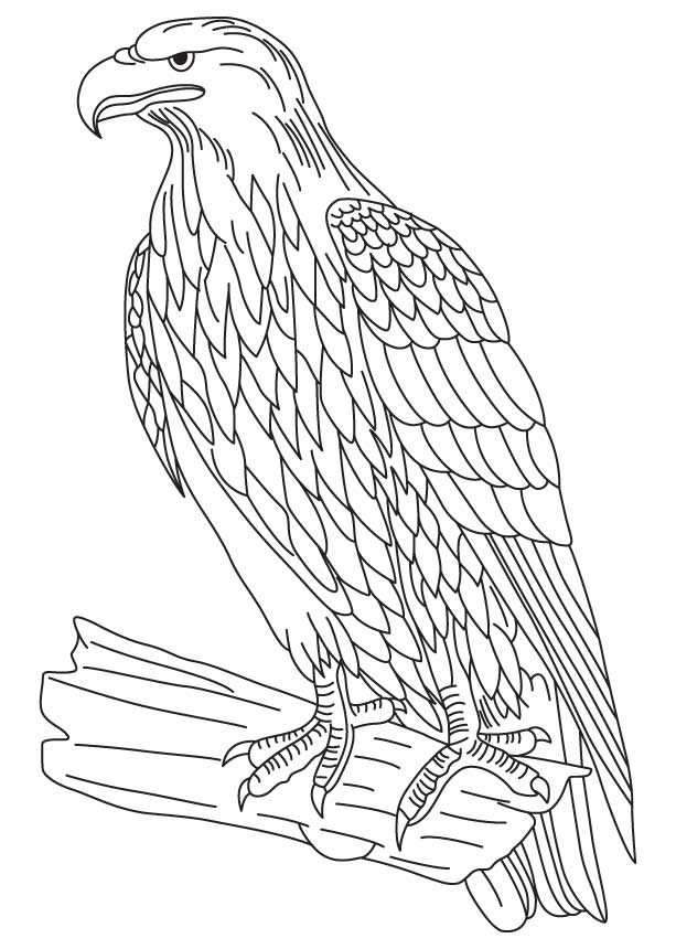 bald eagle coloring pages to print - Coloring Page Eagle