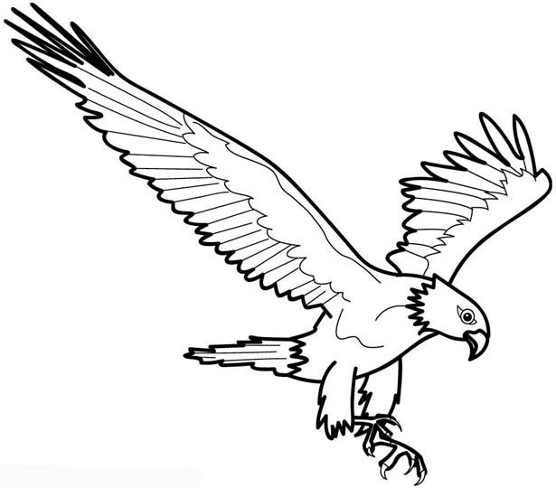 Bald Eagle Coloring Picture