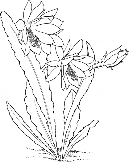 Printable Cactus Coloring Pages
