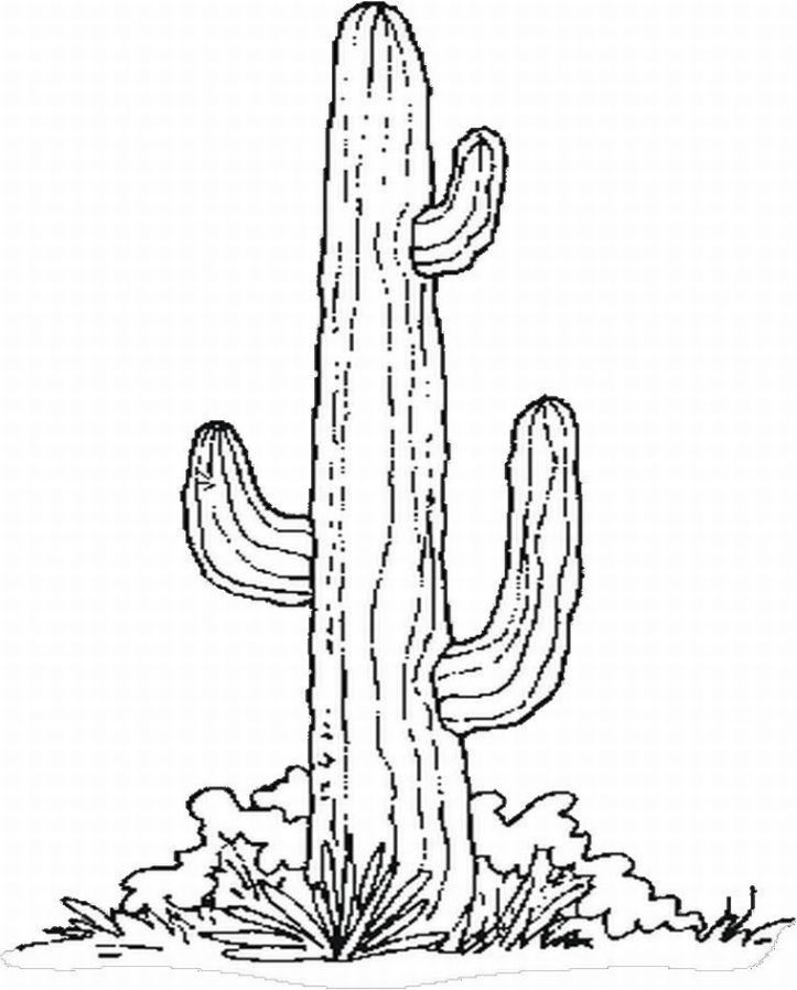 Cactus Coloring Page for Kids