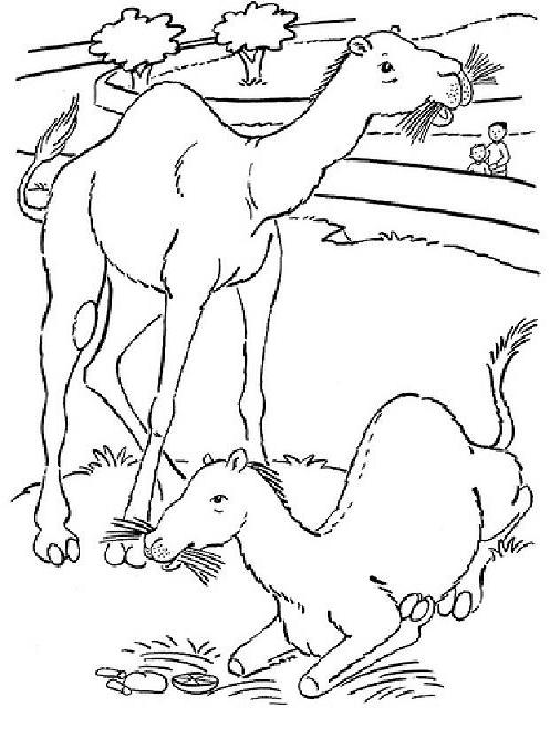 Camel Coloring Pages 360ColoringPages