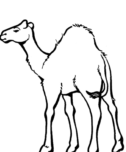 Camel Coloring Sheets for Kids