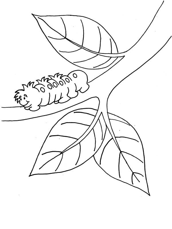 Caterpillar Coloring Sheets