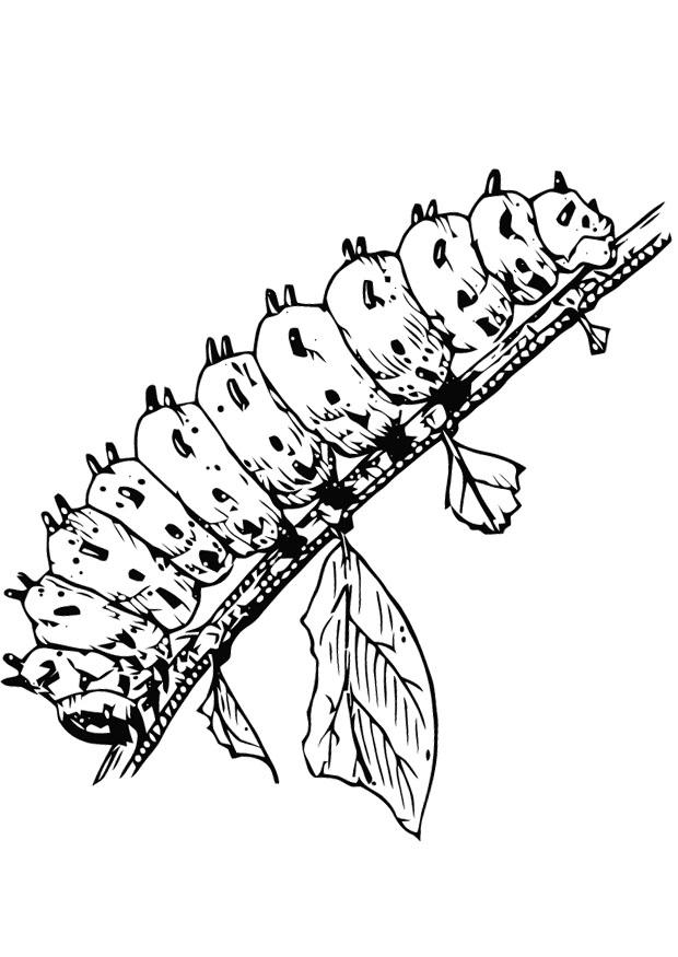 Caterpillar Coloring Sheet