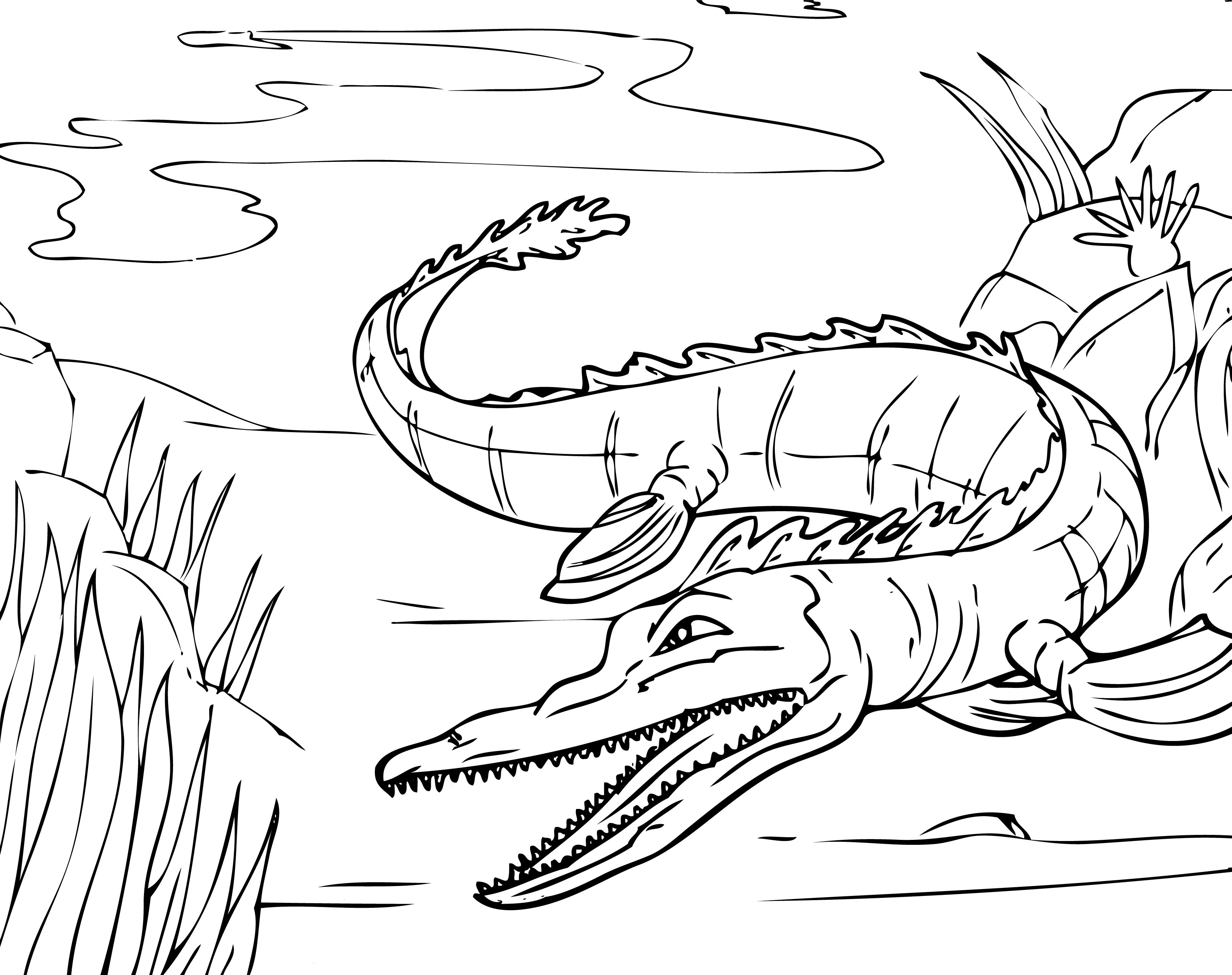 Alligator Coloring Pages to Print