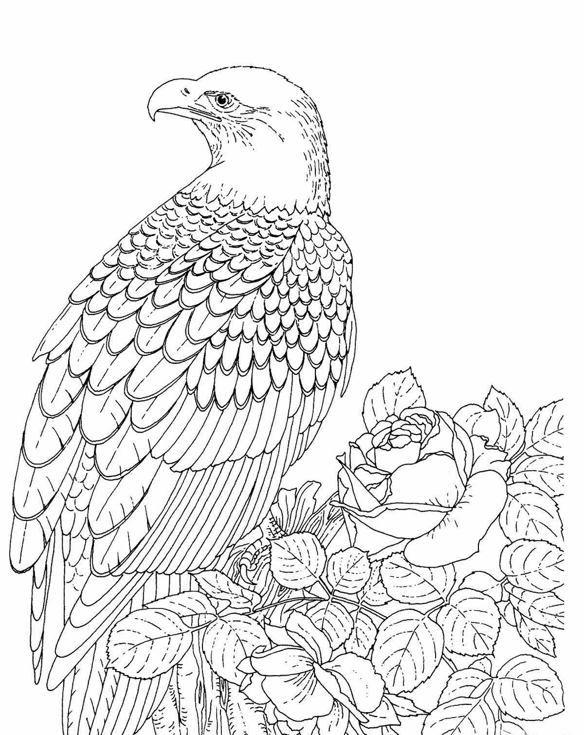 Free Bald Eagle Coloring Page on dragon coloring pages for adults