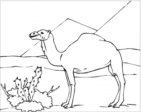Camel Coloring Sheets for Free