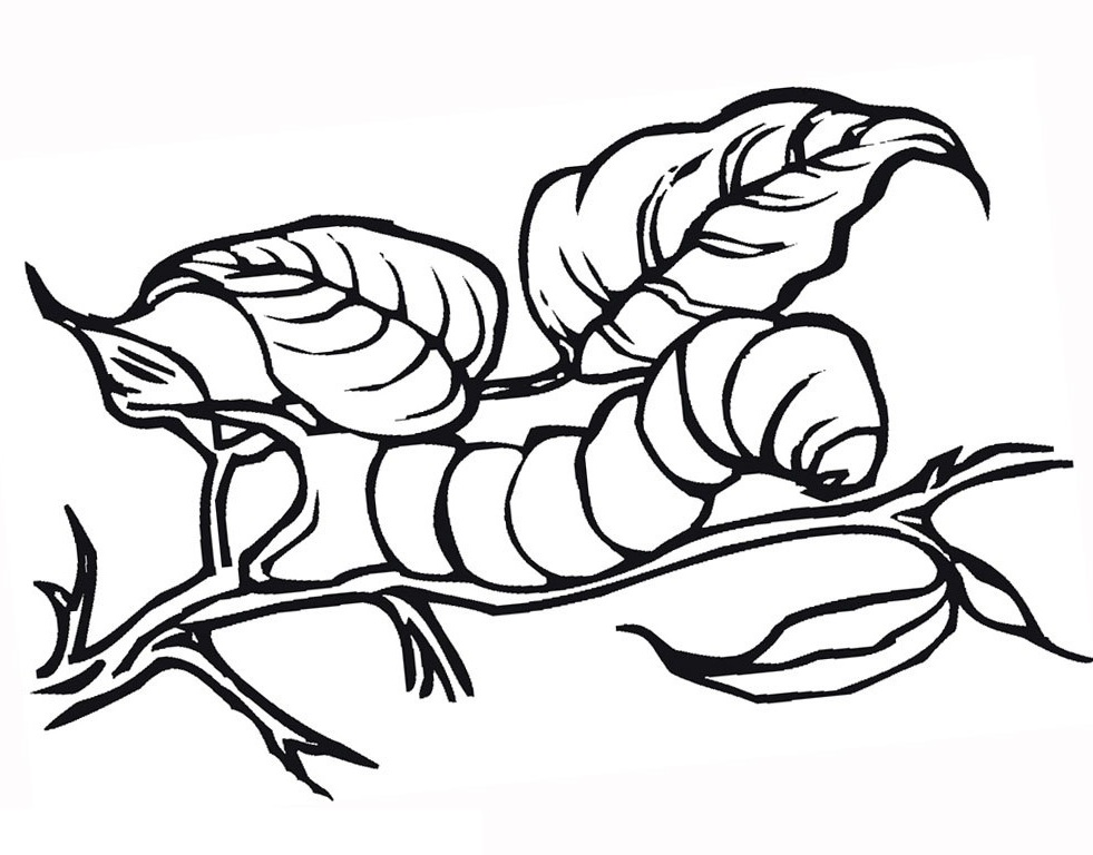 - Caterpillar Coloring Pages 360ColoringPages
