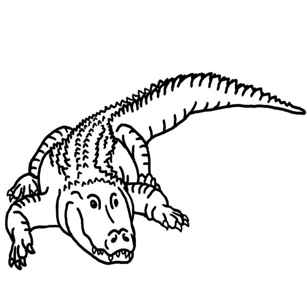 Alligator Coloring Pages Free Printable
