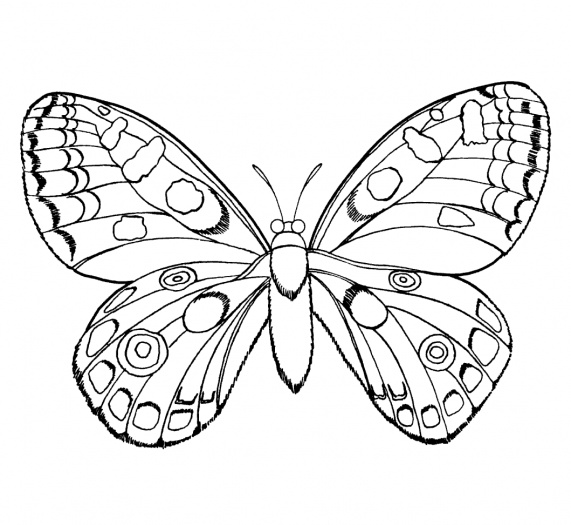 Monarch Butterfly Coloring Pages for Kids