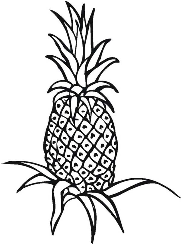 Printable Pineapple to Color