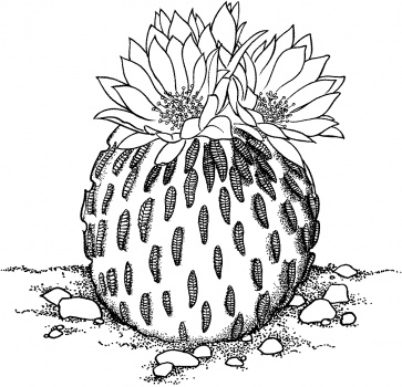 Cactus Coloring Pages Printable