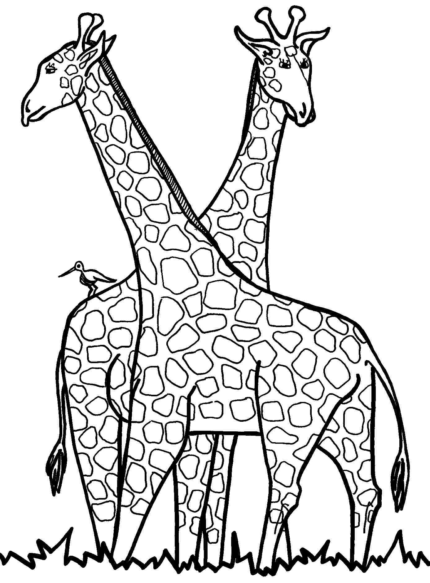 Giraffe Coloring Pages 360ColoringPages