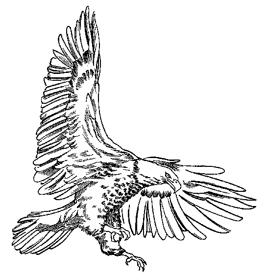Realistic Bald Eagle Coloring Page