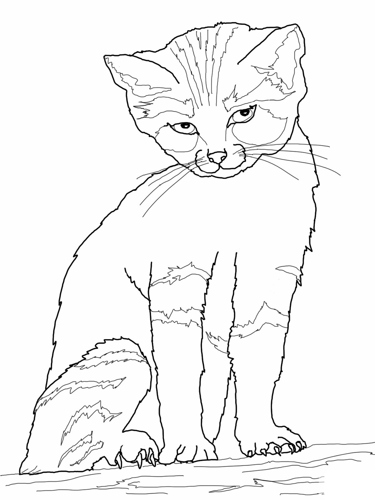 kitten printout coloring pages - photo#40