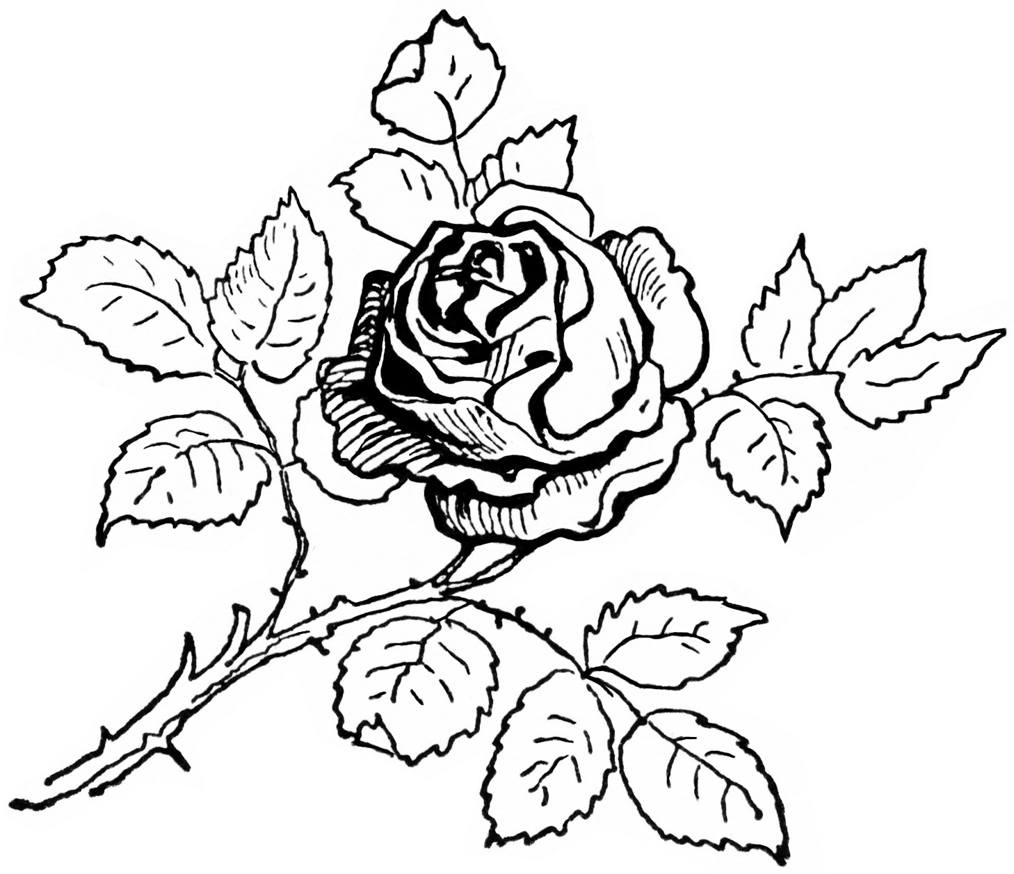 Rose Coloring Pages 360ColoringPages