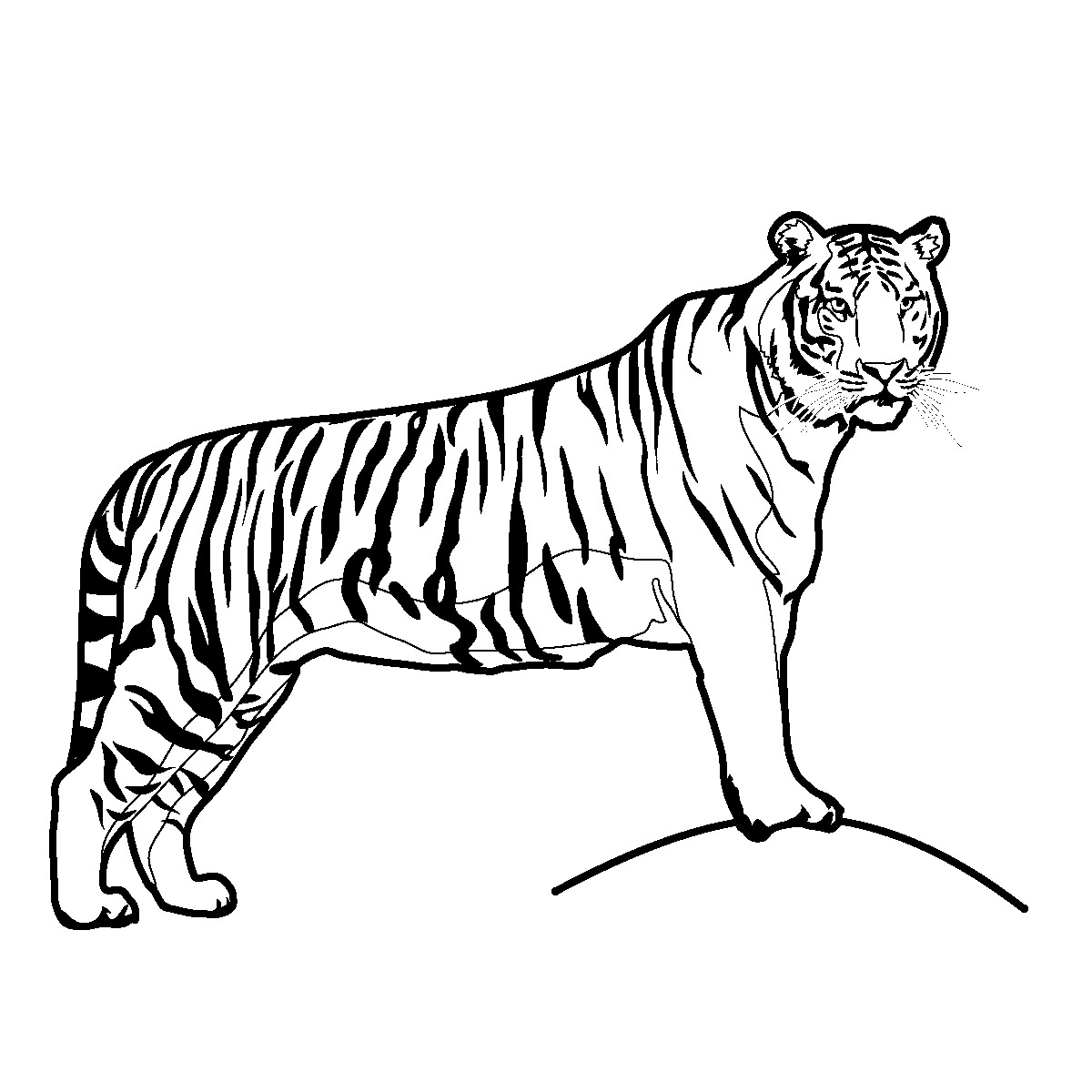 Coloring Pages of Tigers