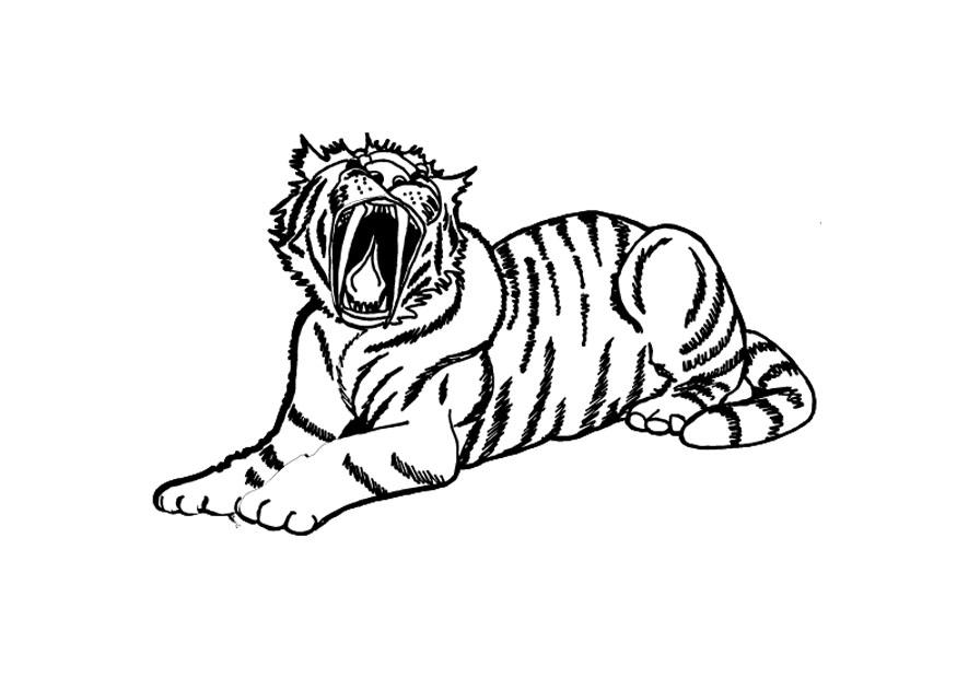 Tiger Coloring Pictures