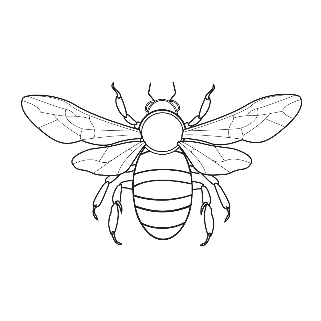Bee Coloring Pages 360coloringpages