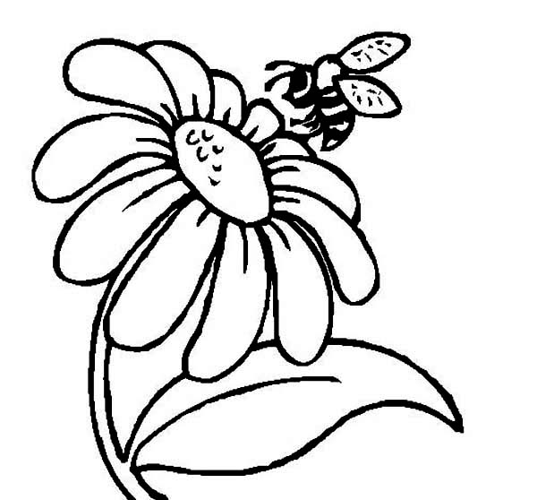 Realistic Bee Coloring Page And Flower