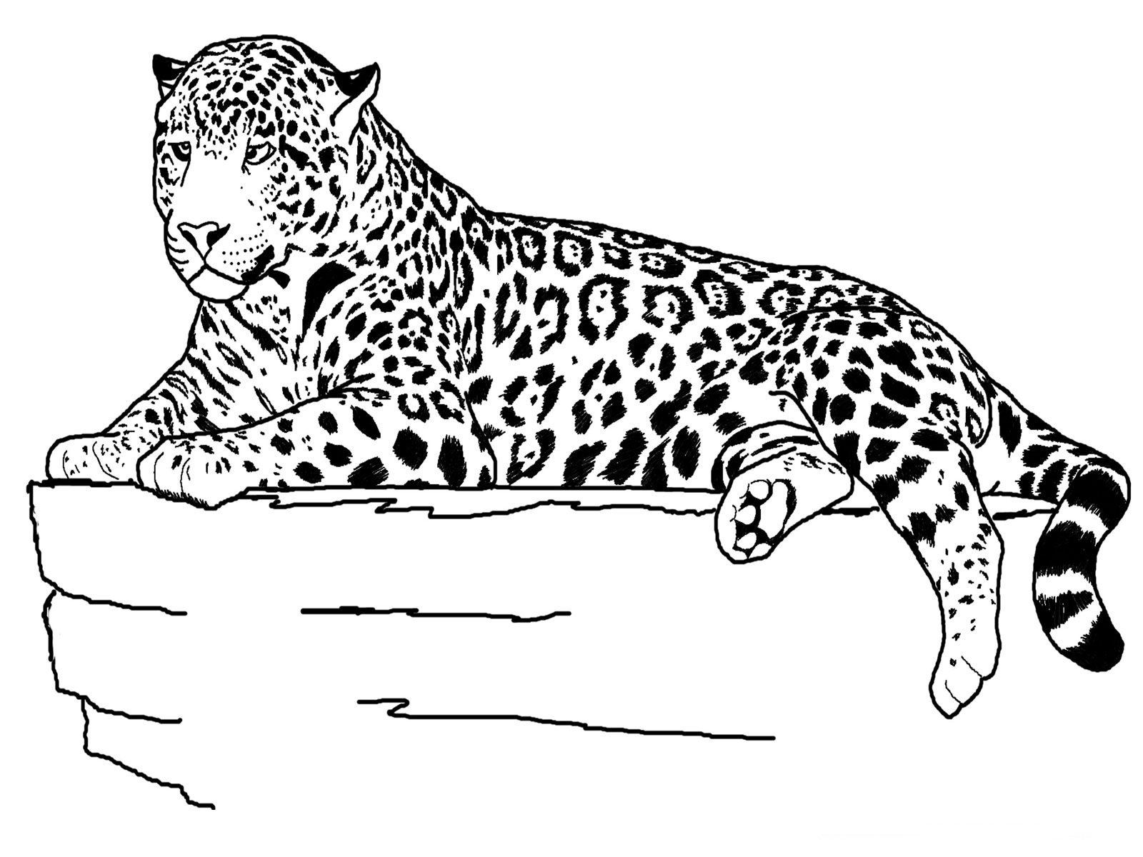 Cheetah Coloring Page for Kids