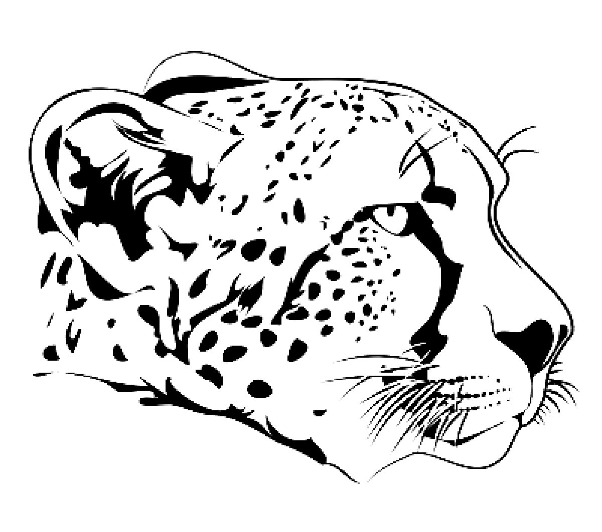 Cheetah Coloring Pages 360ColoringPages