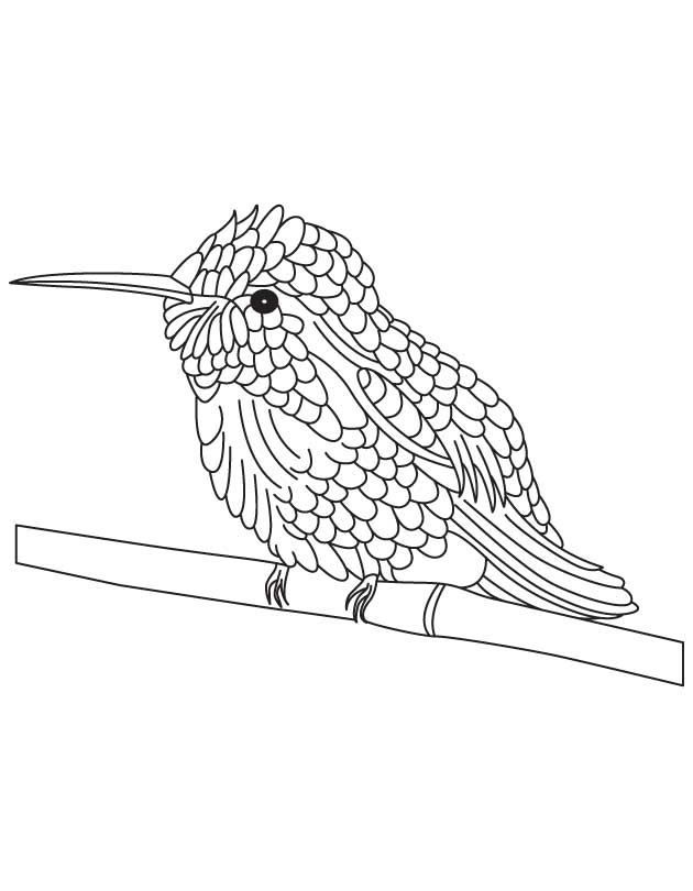 Coloring Pages of Hummingbird