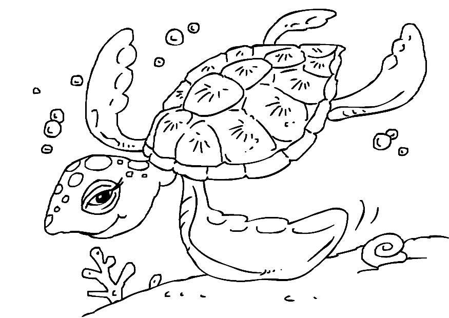 Coloring Pages on Sea Turtle