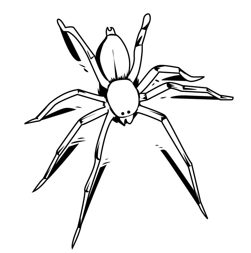 Coloring Pages of Spider