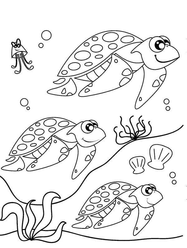 Baby Sea Turtle Coloring Page Cute