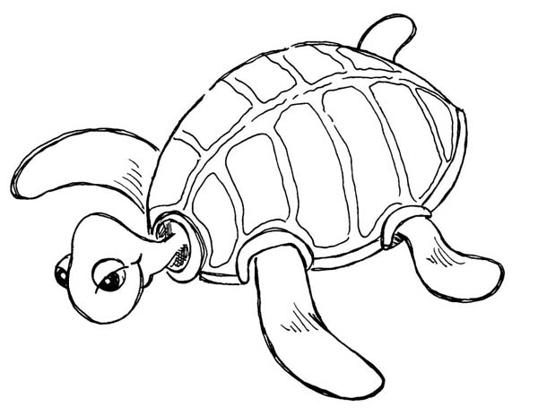 Free Coloring Pages Sea Turtle