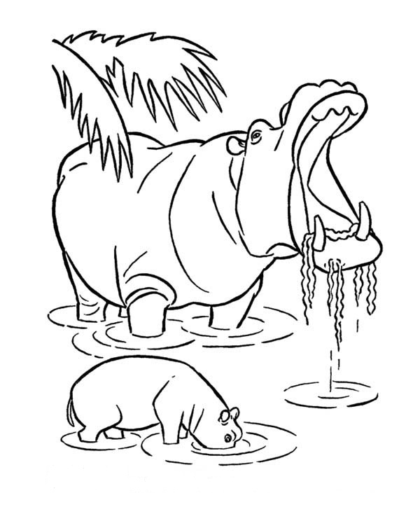 Hippo Coloring Page For Free Pages To Print