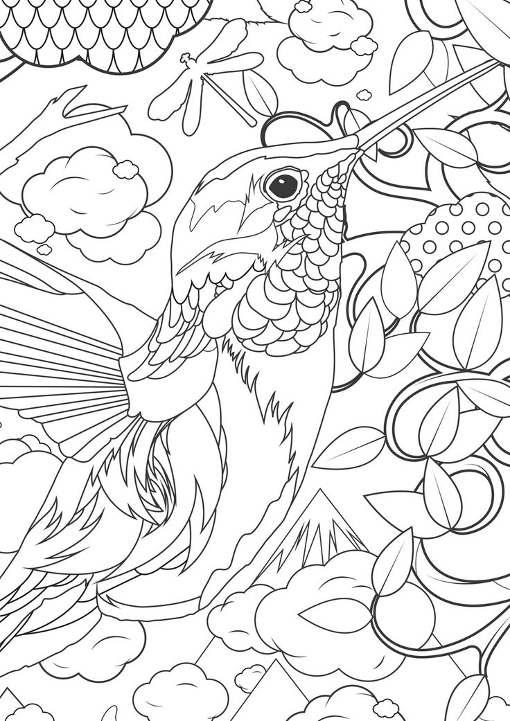 Free Hummingbird Coloring Pages to Print