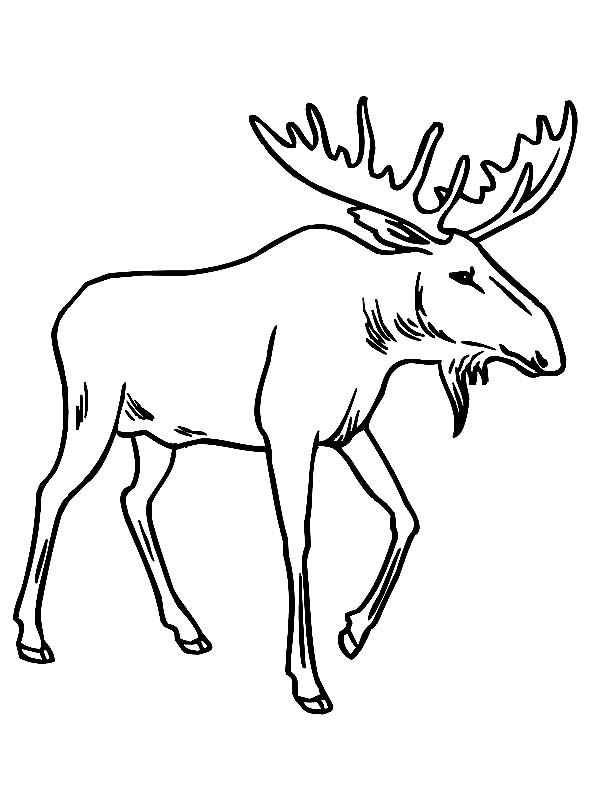Free Moose Coloring Pages to Print