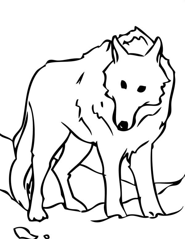 Wolf Coloring Pages Free