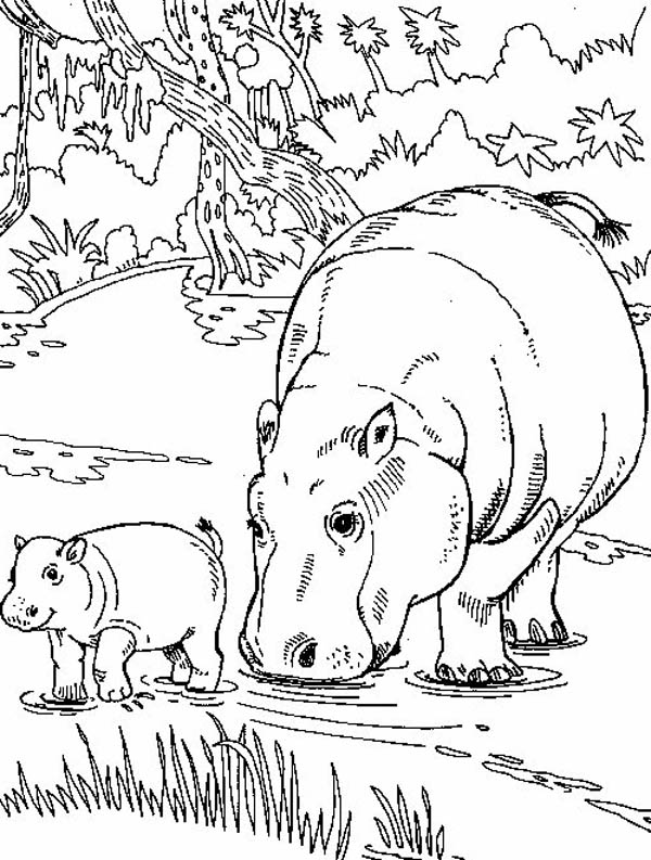 Free Hippo Coloring Page