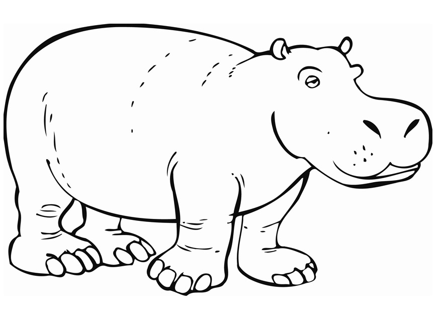 Printable Hippo Coloring Pictures